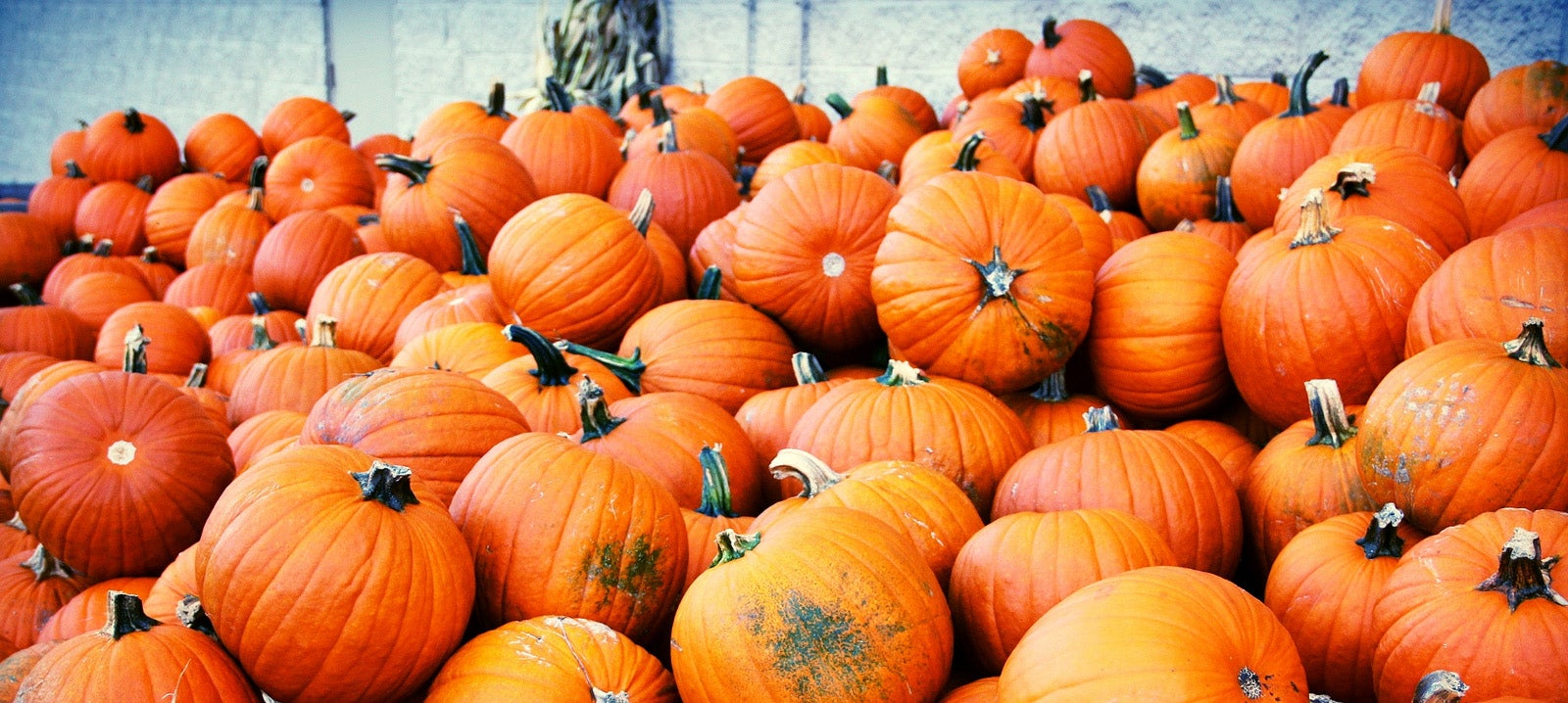 How Ancient People Saved the Pumpkin from Extinction