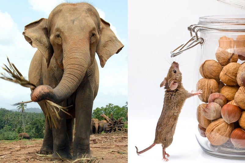 This Is Why a Mouse's Sperm Is Longer Than an Elephant's Sperm