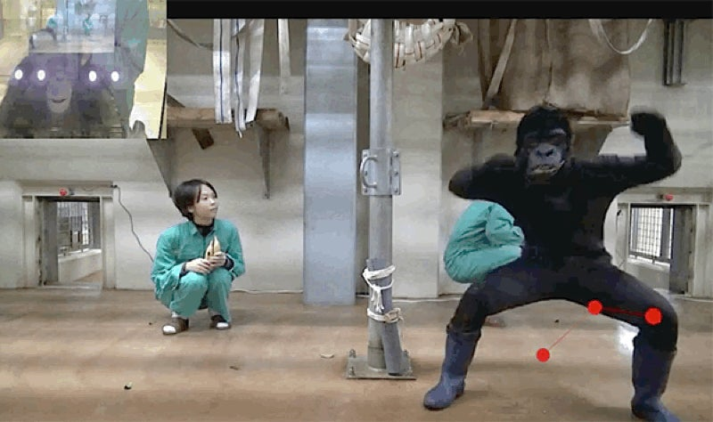 These Researchers Made Their Own Horror Films To Study Memory in Apes