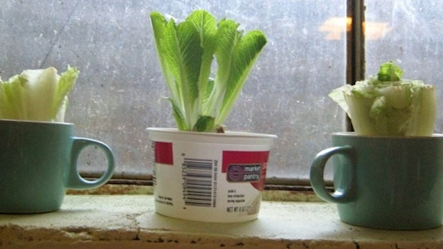 Kitchen Scraps You Can Regrow with Nothing But Water