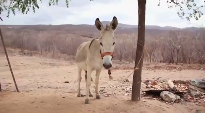 The World's First Beekeeping Donkey Is Sort of Adorable