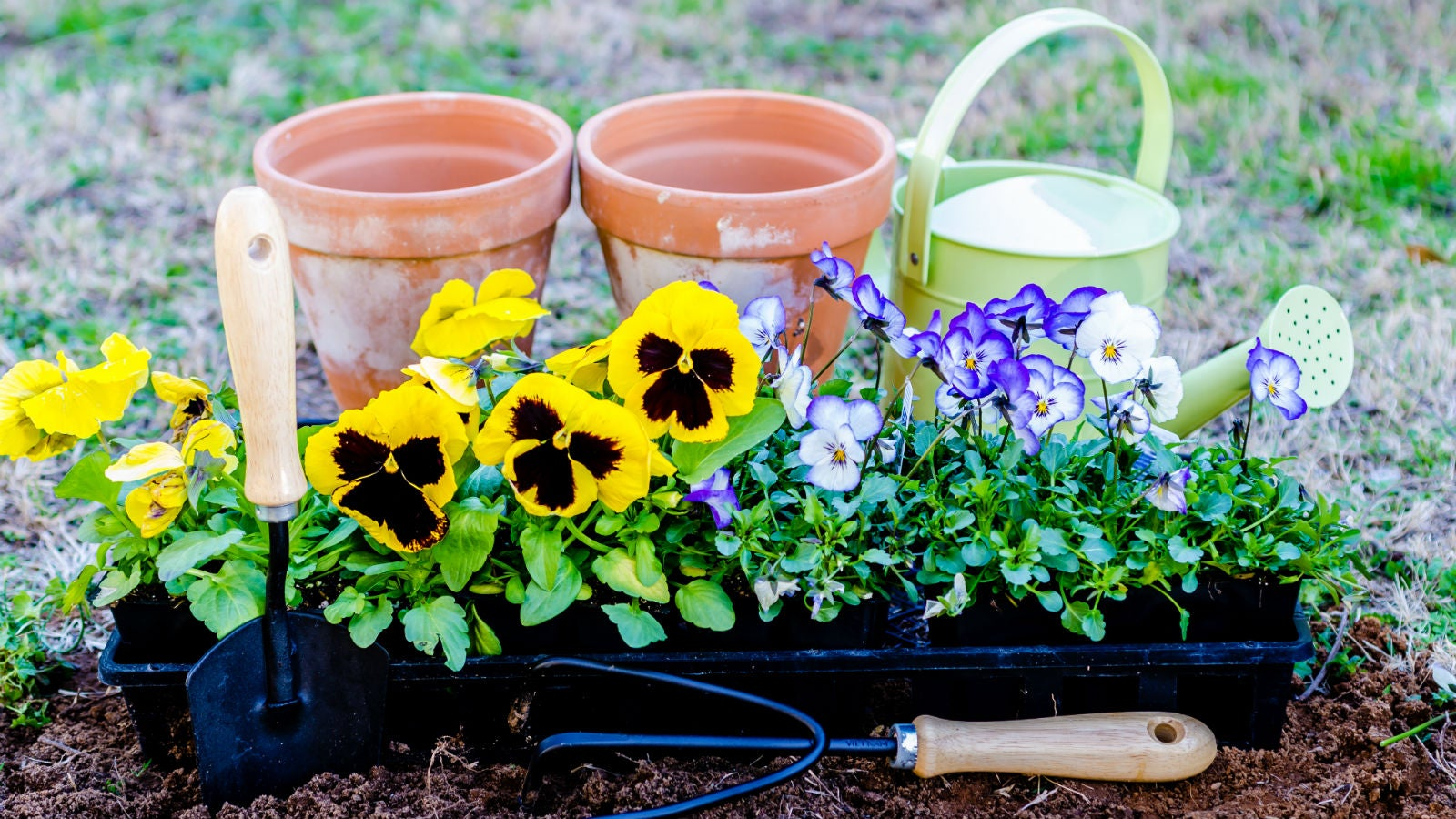 How to get your garden ready for spring planting gizmodo for Gardening australia