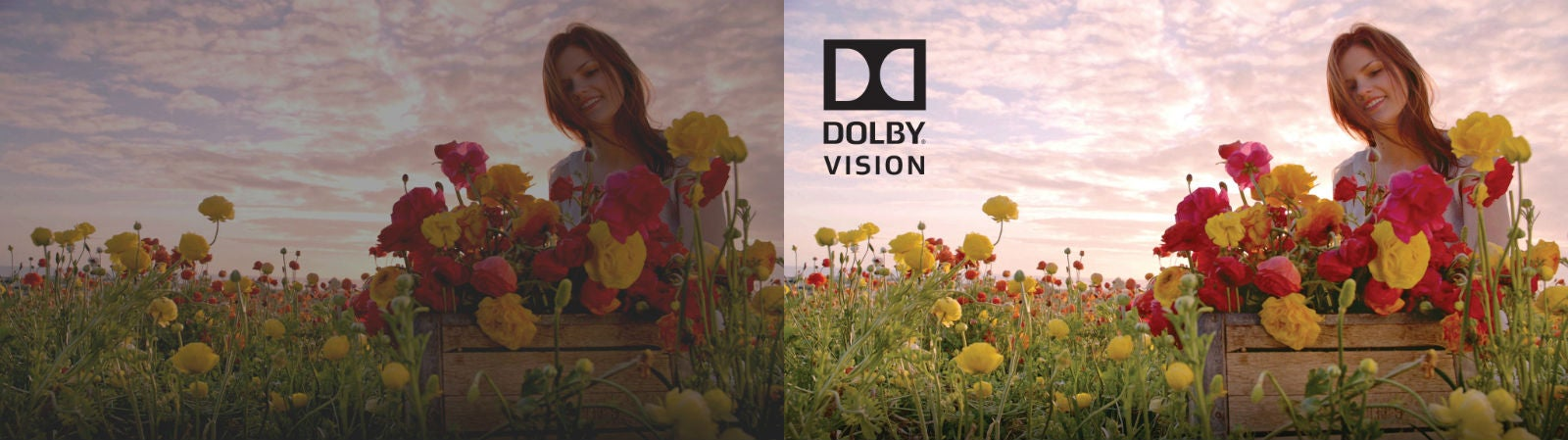 How Dolby Vision Works, and How It Could Revolutionise TVs Forever