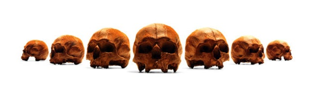 An Anatomical Chocolate Skull For Sweet-Toothed Cannibals