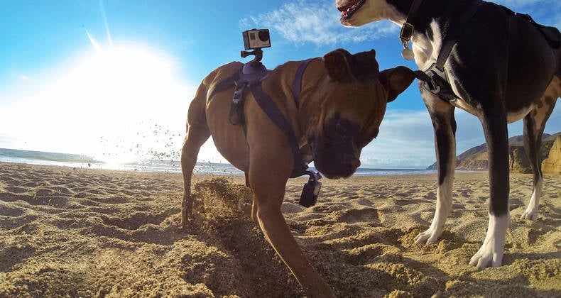 GoPro Finally Has a Dedicated Dog Mount