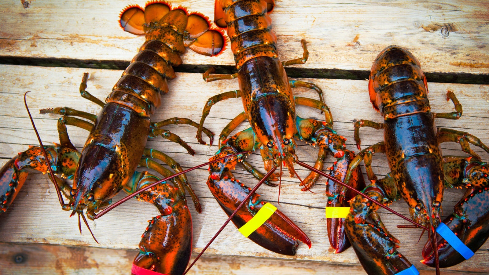 Lobsters Were Once Only Fed To Poor People And Prisoners