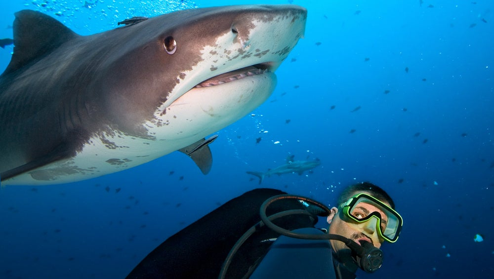 This Electric Fence Could Safely Segregate Swimmers and Sharks