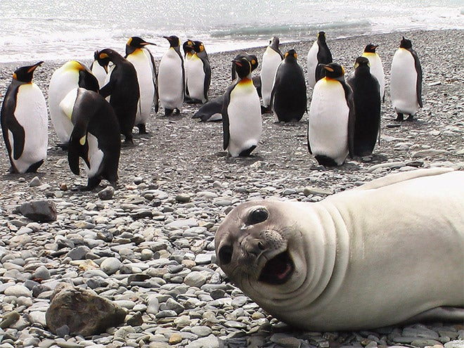 If nobody owns these cool animal selfies, we should give them money