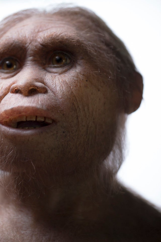 Ancestral Remains of Mysterious 'Hobbit' Species Uncovered on Indonesian Island