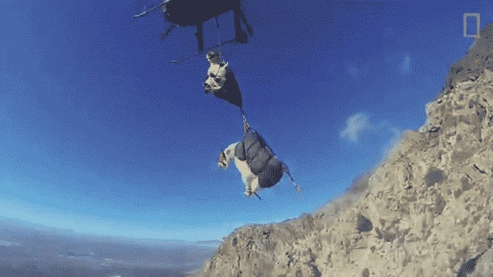 Watching Goats Get Airlifted Is the Best Way to End Your Day