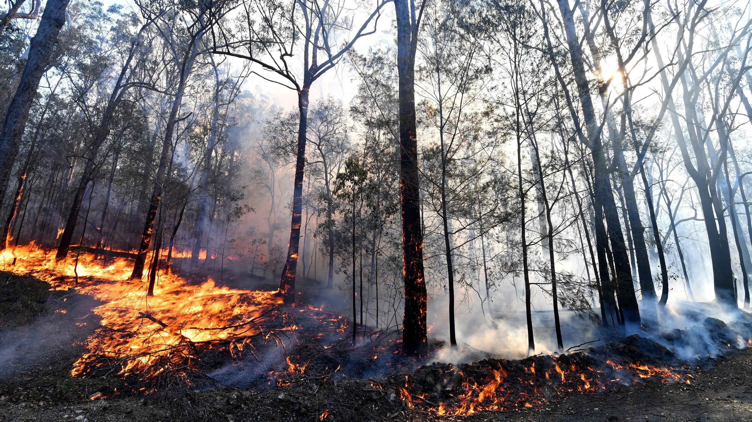 Australia's Terrifying Bushfires Remind Us Climate Change Is Here