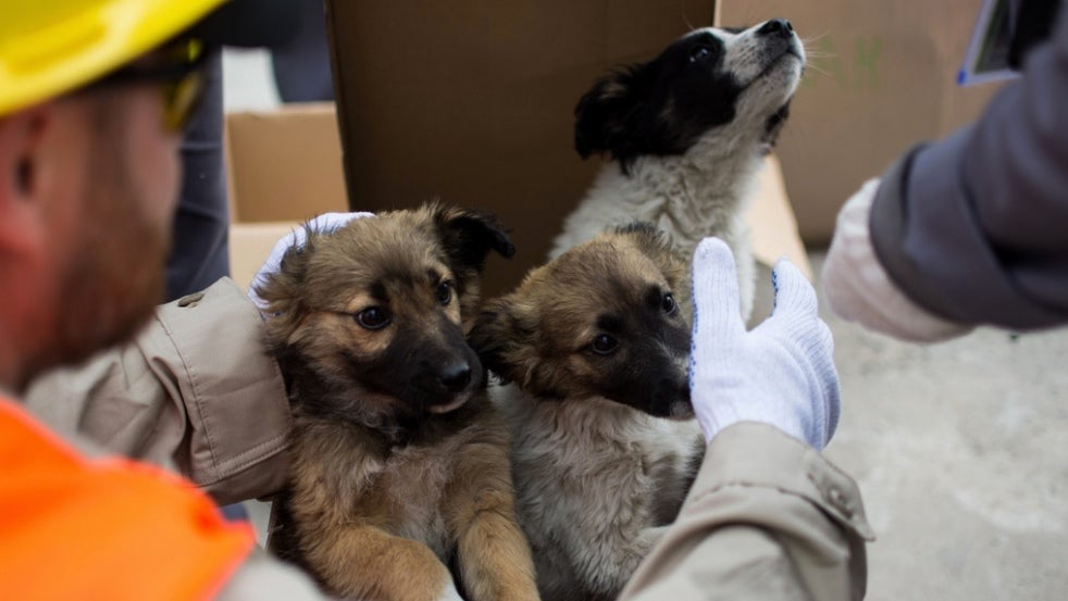 A Dozen Homeless Dogs From Chernobyl Are Being Put Up For Adoption In The U.S.