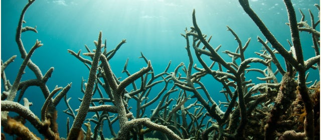How Global Warming Is Dissolving Sea Life (And What We Can Do About It)