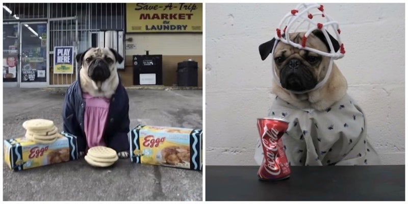And Now, a Pug Dresses Up Like All of the Stranger Things Characters
