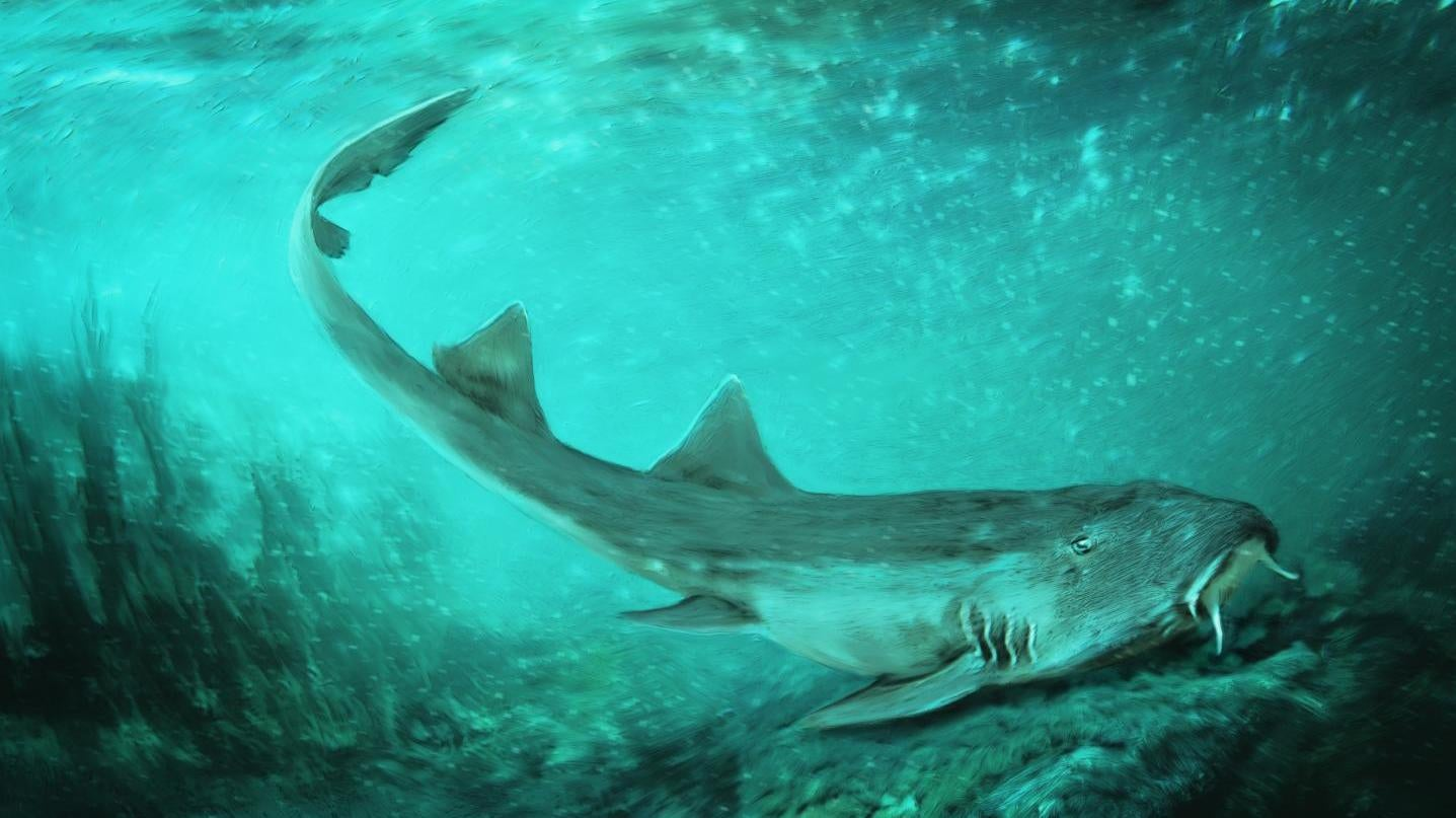 Ancient Shark With Spaceship-Shaped Teeth Named After Vintage Video Game