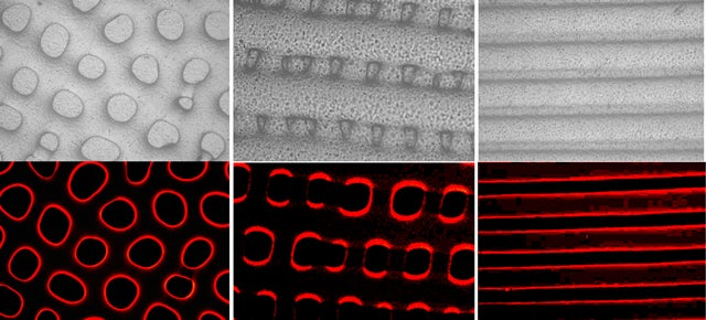 This Synthetic Material Changes Colour and Texture Like Octopus Skin