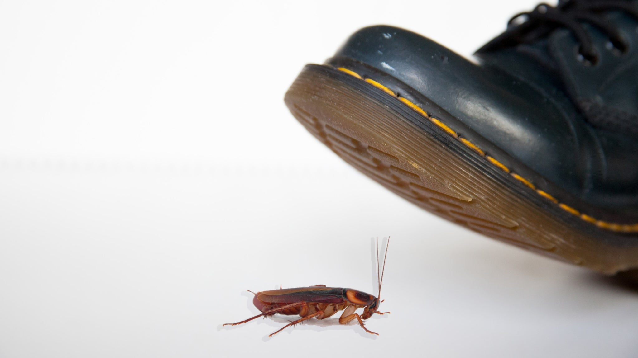 Name A Cockroach After Your Ex This Valentine's Day