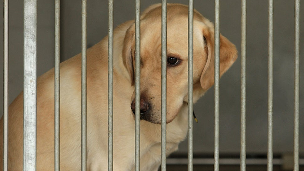 After Pressure, USDA Adds 'A Tiny Fraction' Of Animal Abuse Records Back To Website