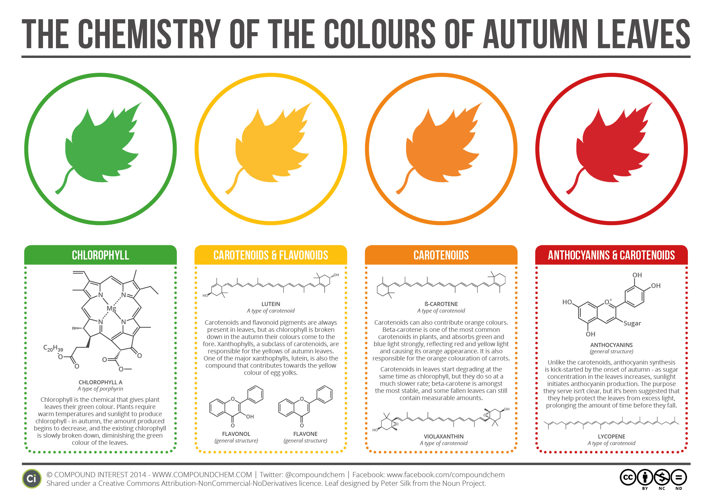 The Chemistry Behind the Different Colours of Autumn Leaves
