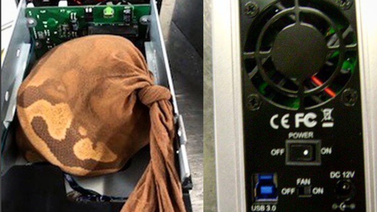 Live Python 'Artfully Concealed' In Hard Drive Enclosure Fails To Get On Plane