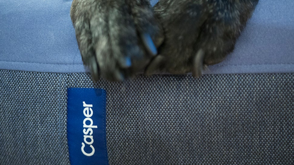 Casper Made a New Mattress...For Dogs