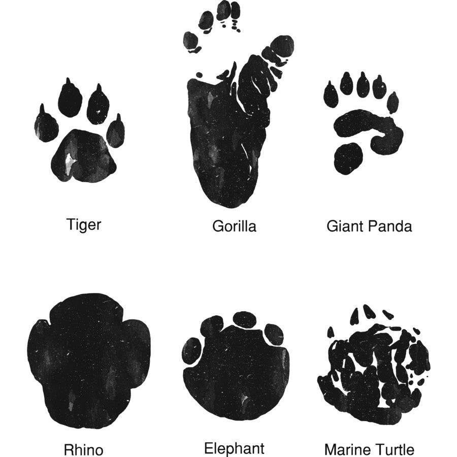 What Animal Tracks Mean For You