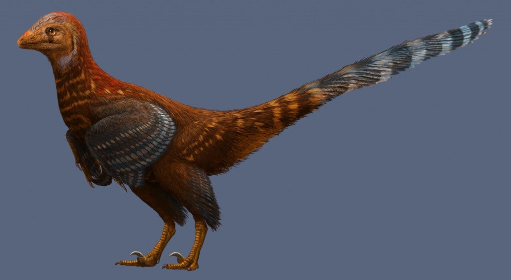 This New Dinosaur Looked An Awful Lot Like A Chicken