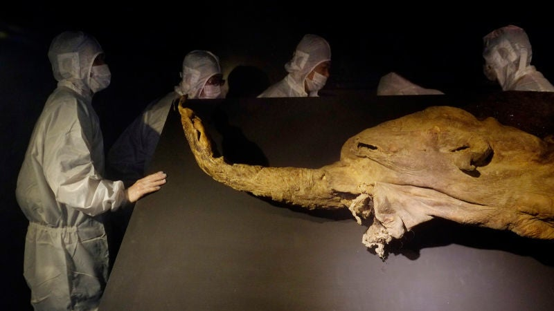 If You Resurrect The Woolly Mammoth, Can You Still Call It A Woolly Mammoth?