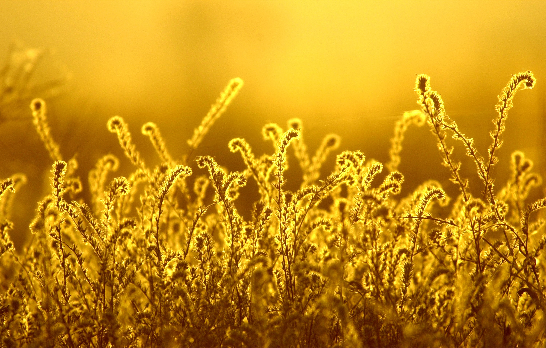 Mutant Grass Is Terrorising Oregon