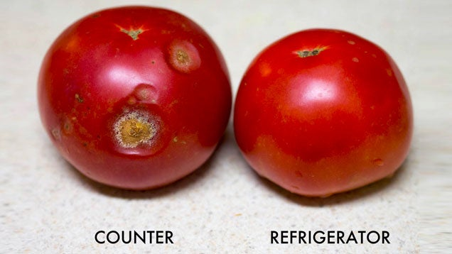 Store Ripe Tomatoes In The Fridge