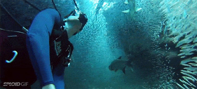 Swimming with a million fish looks like being in a teleportation tunnel