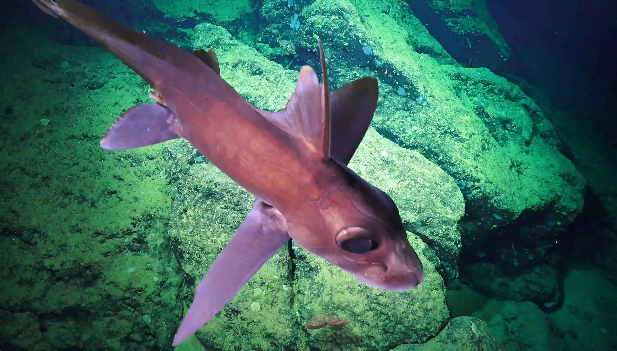 Spooky New Photos Show The Alien Creatures Of The Deep Ocean