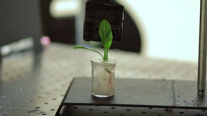 These Bionic Plants Can Detect Deadly Land Mines