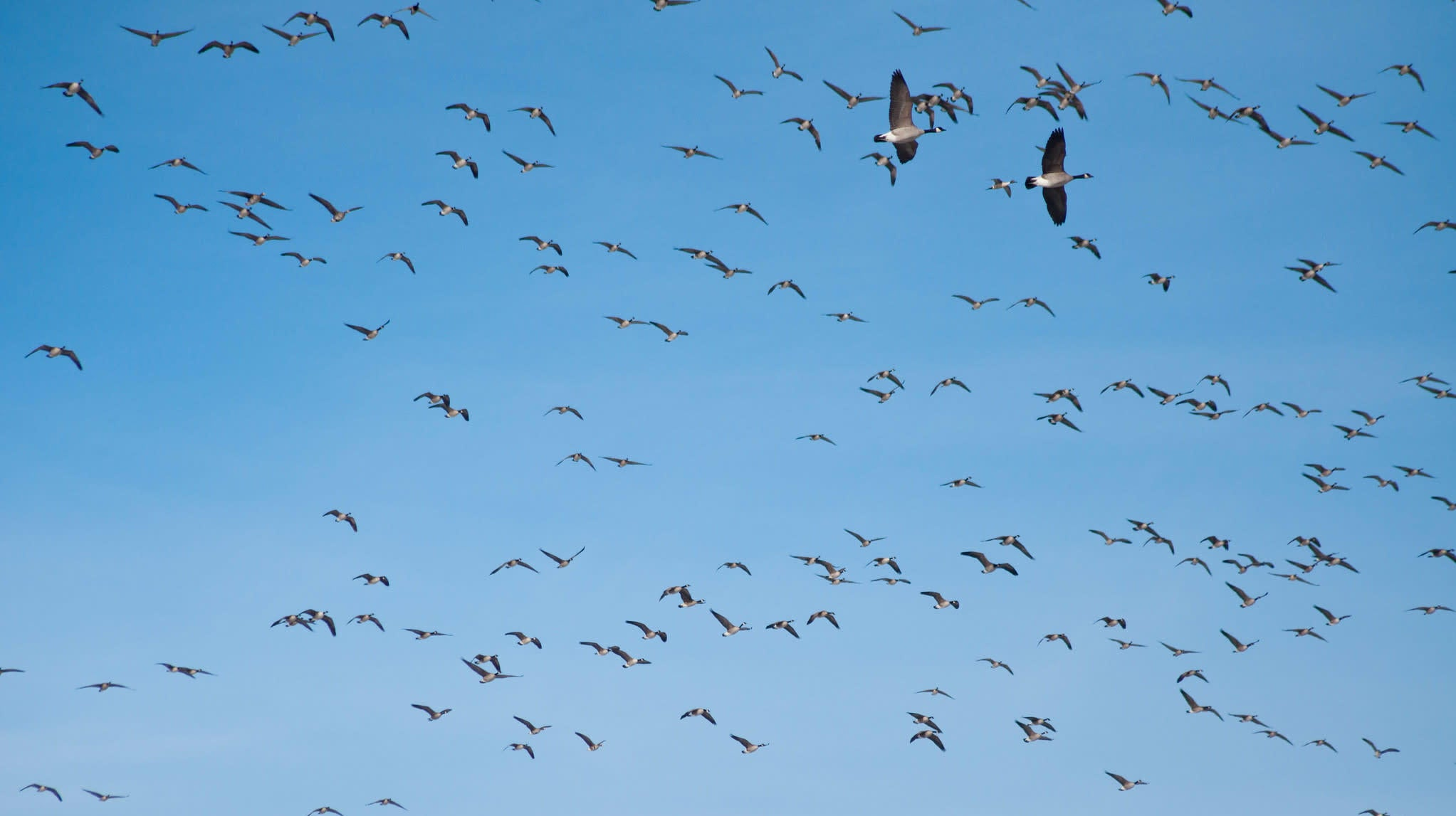 NORAD Will Neither Confirm Nor Deny A Flock Of Birds Caused White House Lockdown