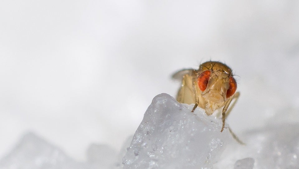 What Happens When You Keep Fruit Flies in Total Darkness for 60 Years