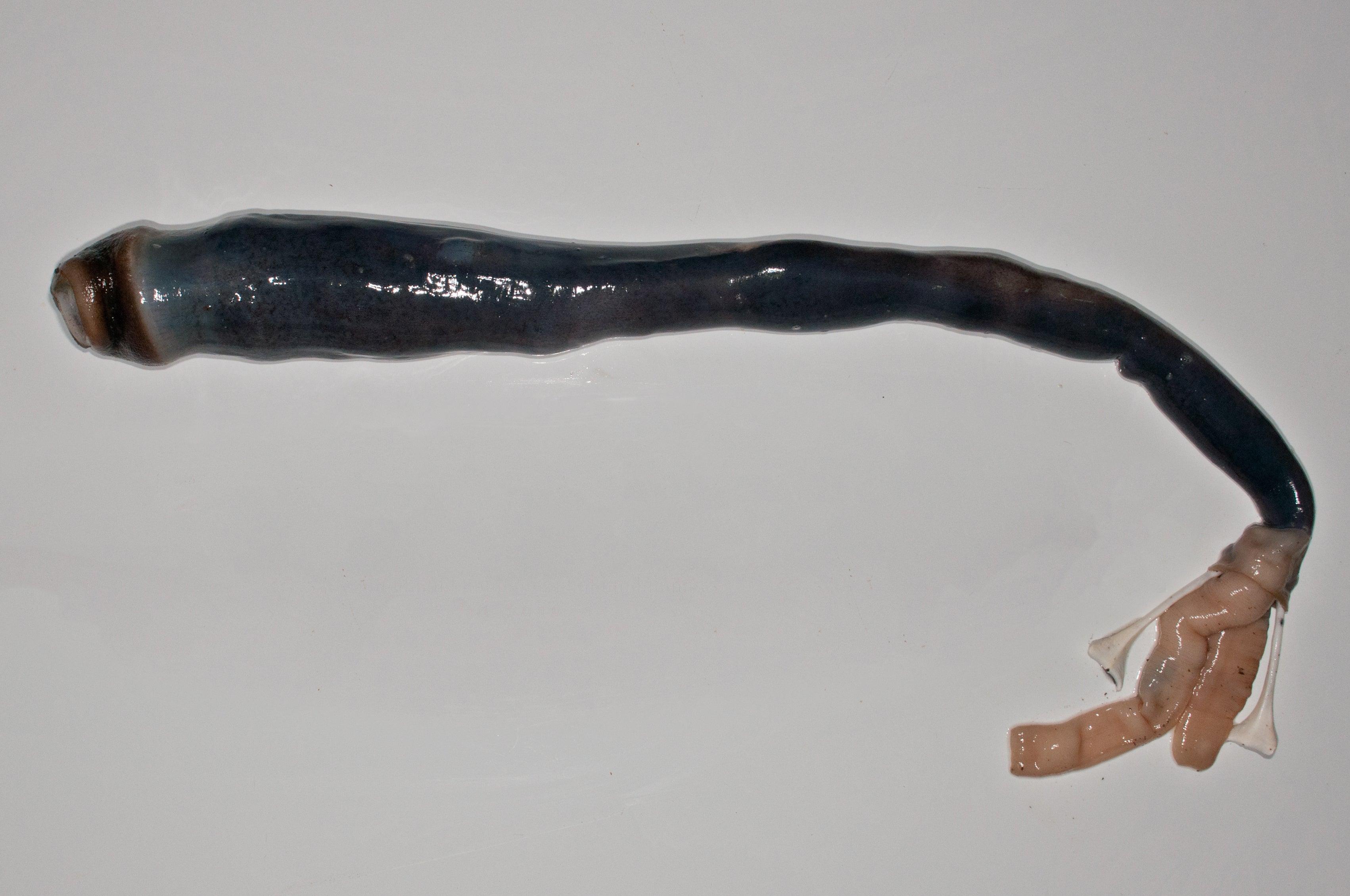 This Alien Worm-Creature Will Haunt Your Nightmares