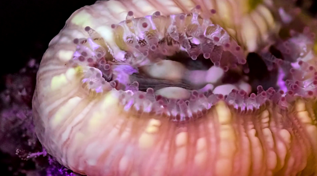 These Macro Shots of Marine Life in Motion Are Unbelievably Beautiful