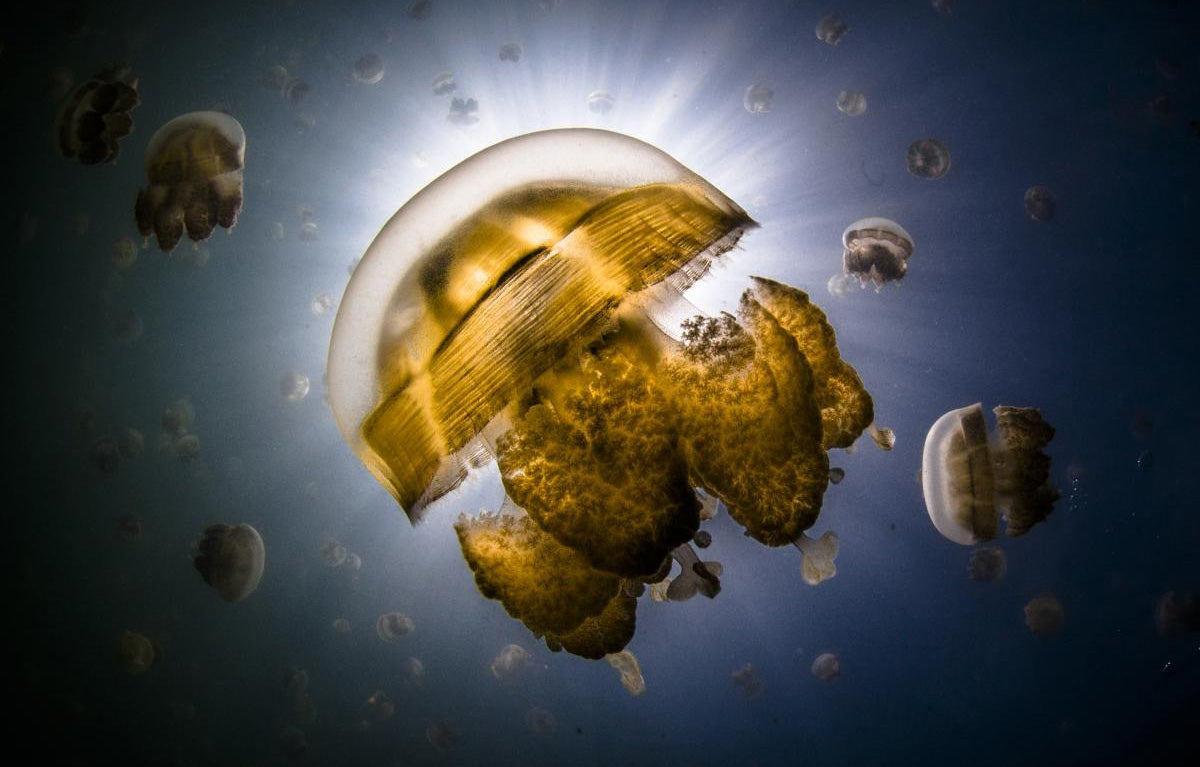 These Photos Show the Alien Beauty of Life Underwater