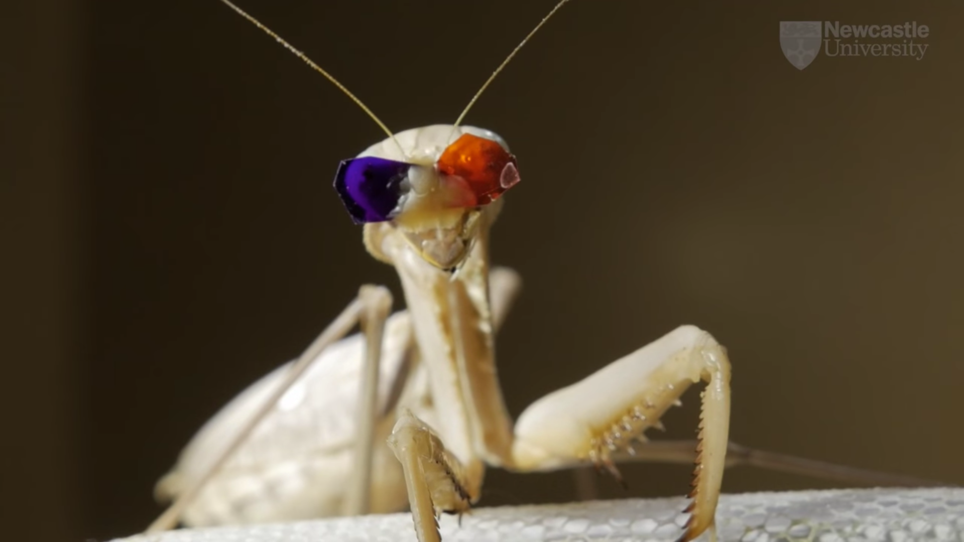 Praying Mantises Have A Completely Different Way Of Seeing In 3D