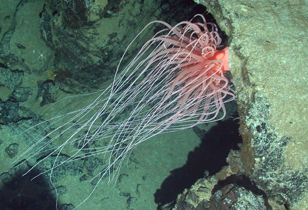 Check Out All the Alien Species Discovered By Deep Sea Vehicle Alvin