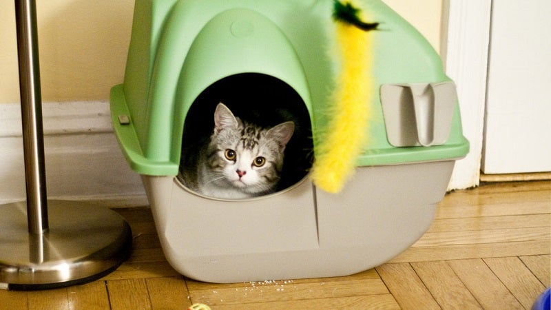 Fight Off Foul Litter Box Odours With A Layer Of Bicarbonate Of Soda