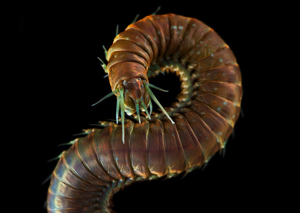These beautiful underwater monsters will haunt your dreams tonight