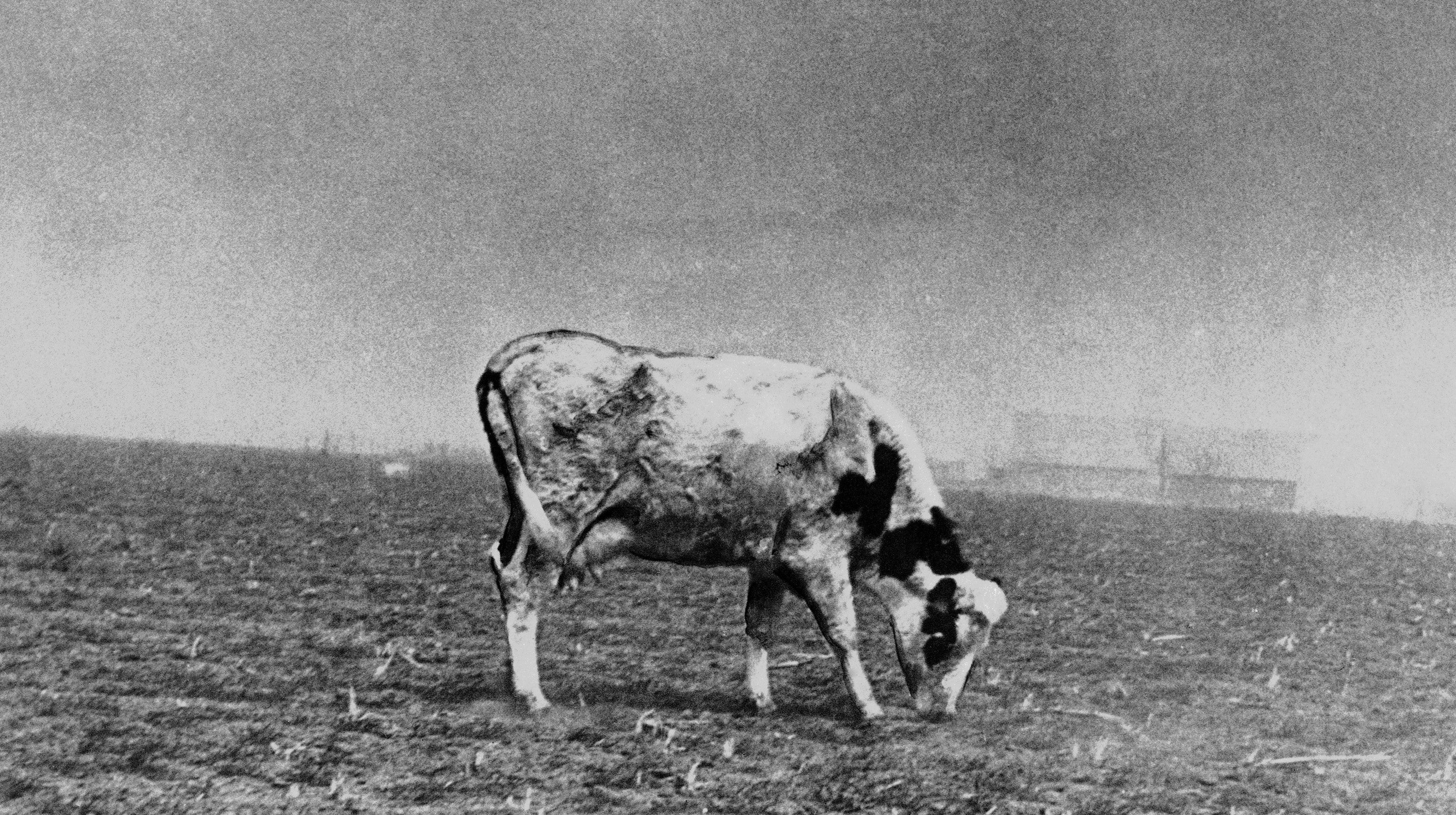 Carbon Emissions Have More Than Doubled The Chances Of Another Dust Bowl