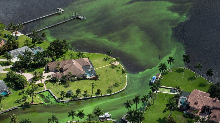 Florida's Slime Coast Is a State-Sponsored Disaster