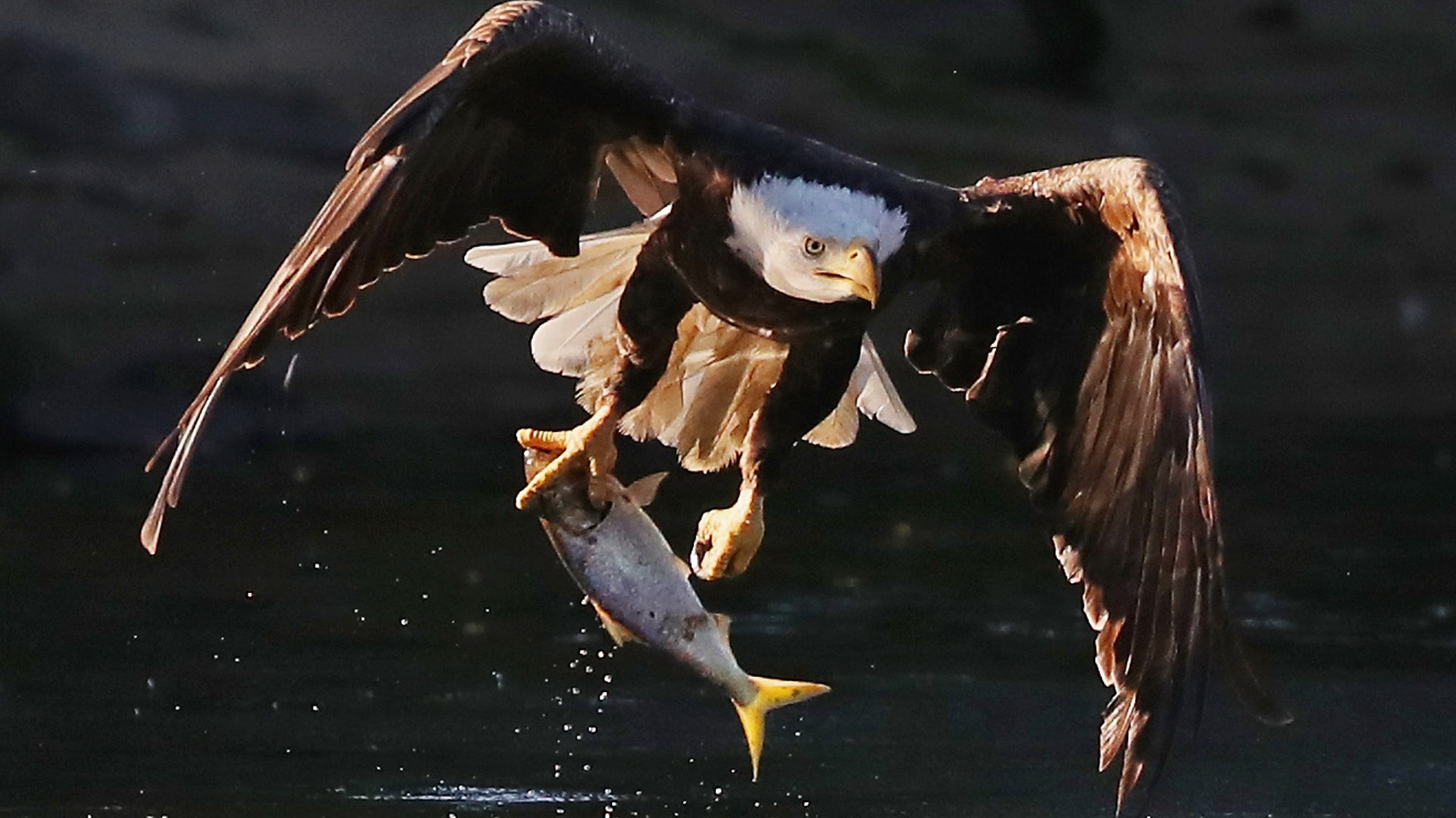 Trump Administration Guts America's Endangered Species Act