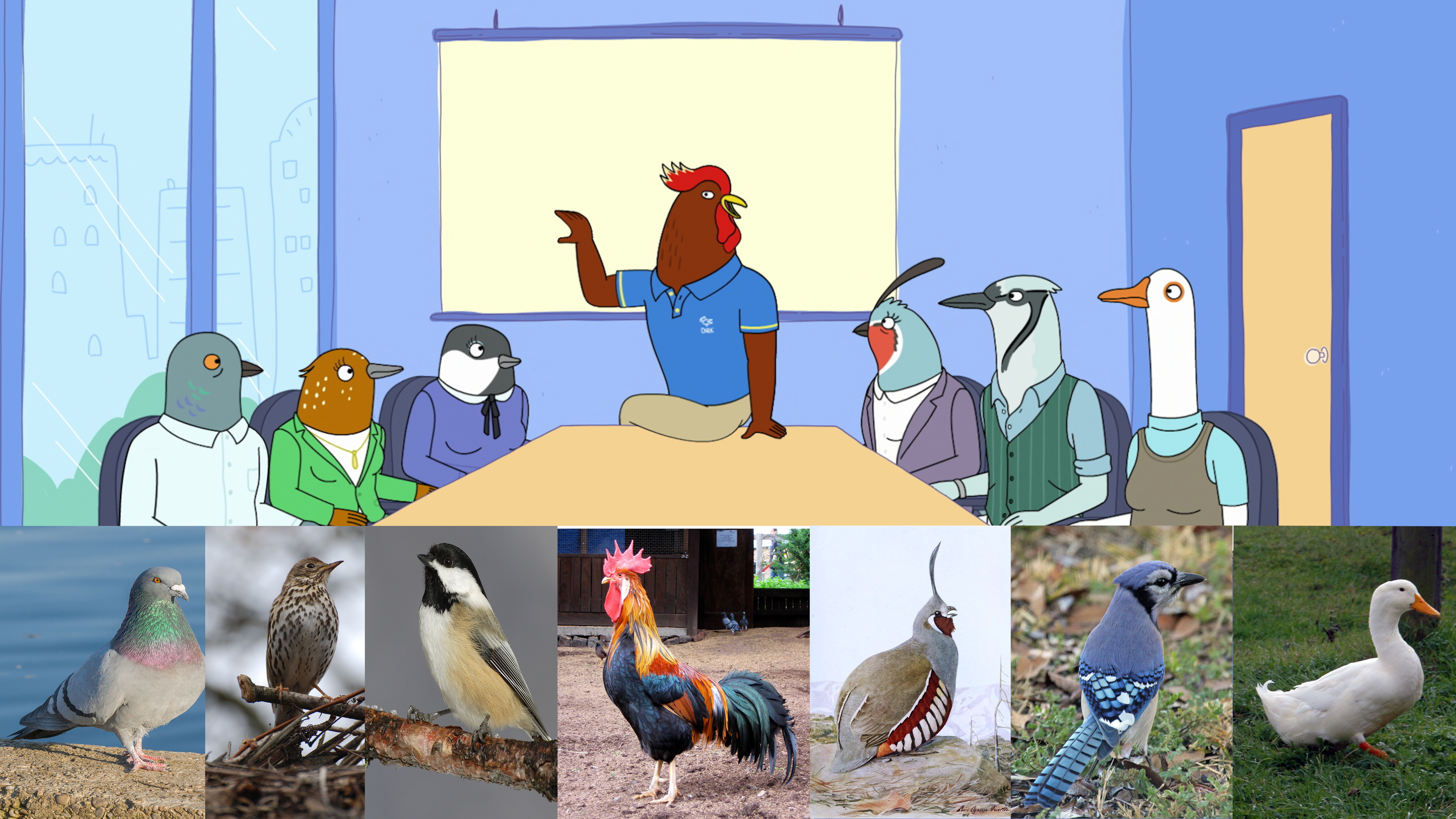 An Avian Aficionado Watched Tuca & Bertie, Then Tried To Identify All The Birds
