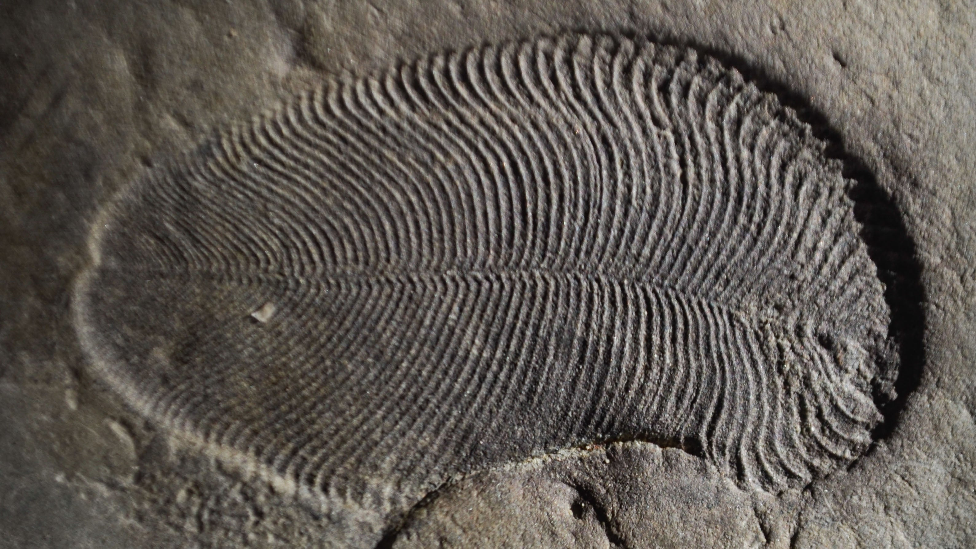 Extraordinary Evidence Suggests 558-Million-Year-Old Fossil Is The Oldest Known Animal On The Planet