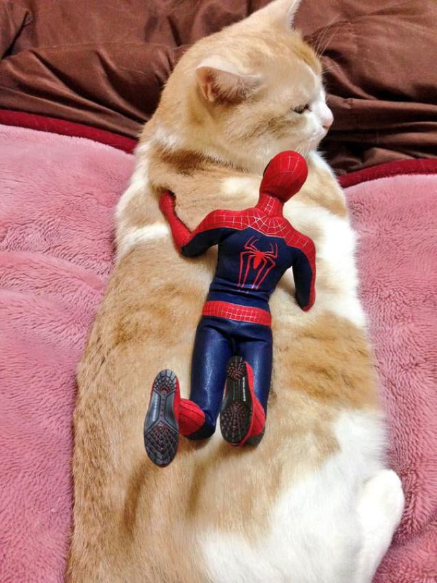 Spider-Man Shows His Sensitive Side with Cats