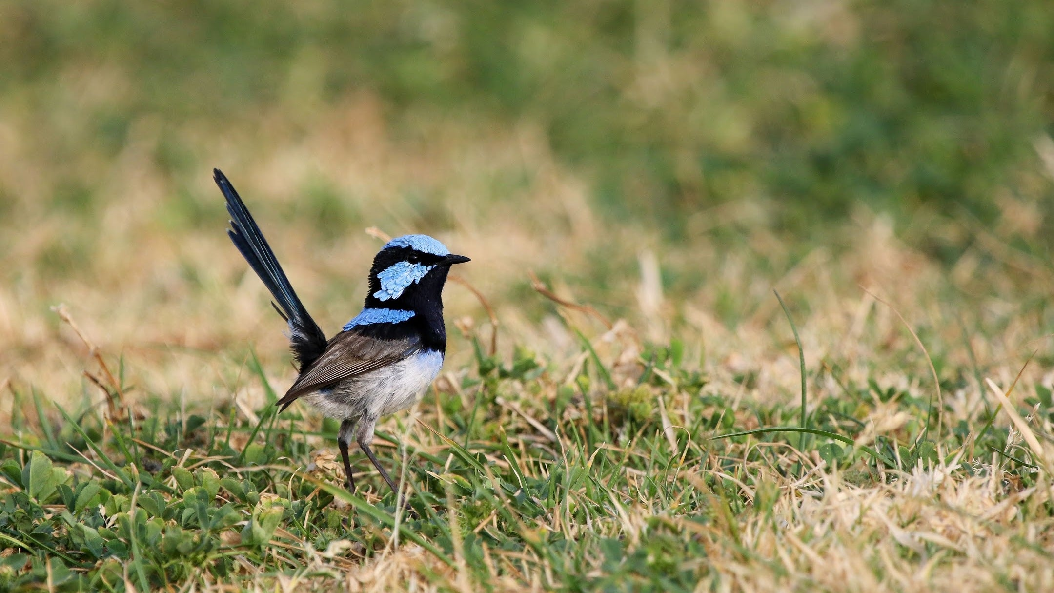 These Australian Birds Learn About Danger By Listening To Their Friends