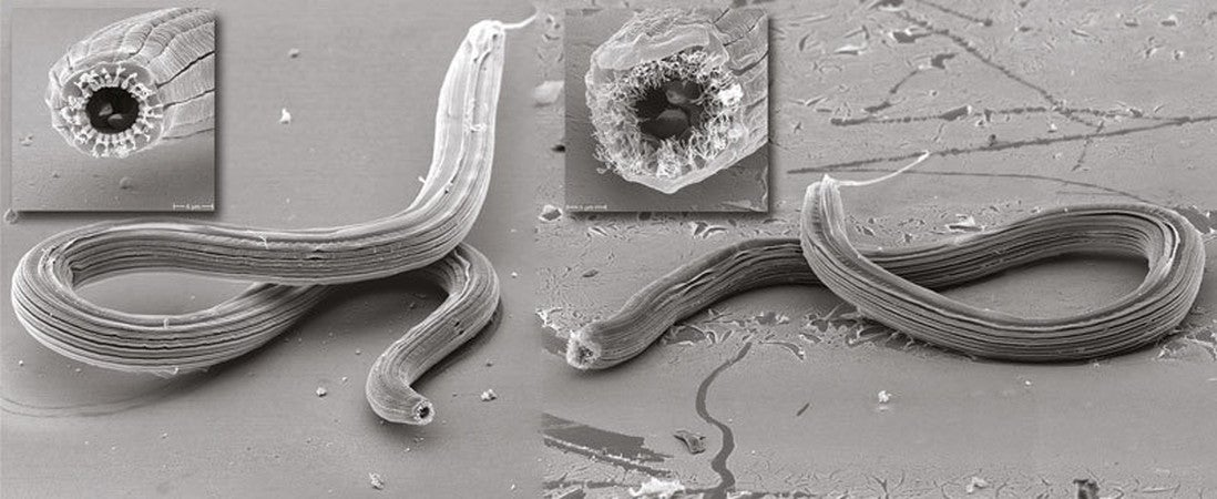 Newly Discovered Worm's Mouth Morphs Into 5 Radically Different Shapes